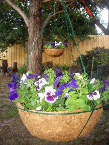 Pansy baskets brightening up a shady area