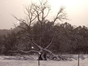 Dead tree 2010