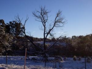 Dead tree 2012