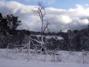 Dead tree 2015